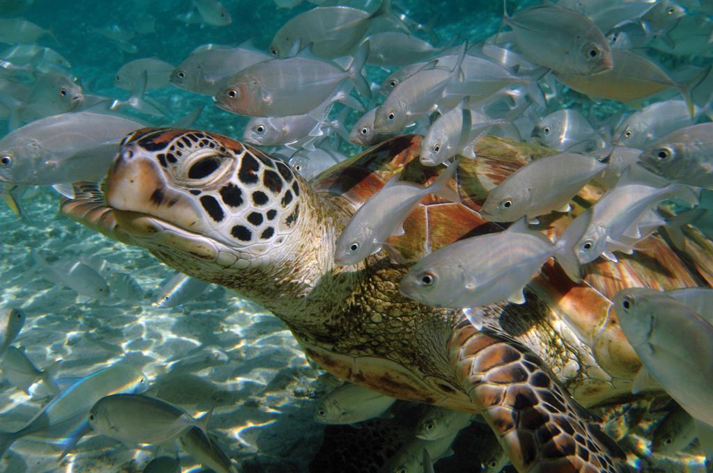The Brando på ön Tetiaroa erbjuder en sagolik marin värld. Dyk med tuber.